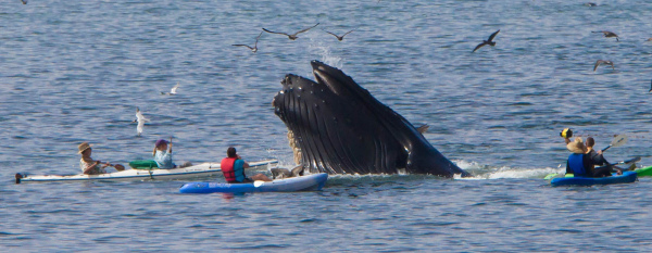 My Whale Captures by Dawn Beattie, Creative Commons 2014
