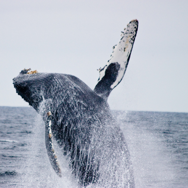 On an Oceanic Society tour of the Farallon Islands. Photo by Ken-ichi Ueda, Creative Commons