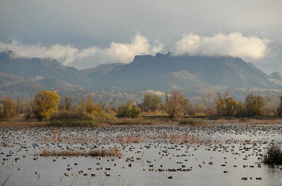 The Sutter Buttes as seen from Gray Lodge (photo by Miguel Vieira)