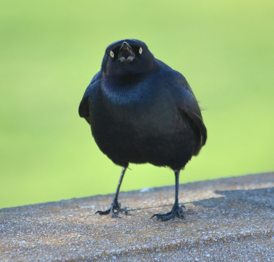 """I don't care if you need four-and-twenty blackbirds, I'm not going into that pie!? (photo by"